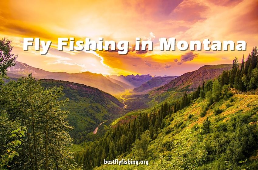 Fly Fishing Montana. Montana controls the majority of its rivers for wild trout; which means hatchery-born fish are not released into these rivers.