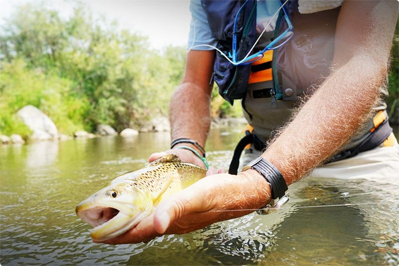 Best Fly Fishing In Montana. Fly fishing in Montana is an experience unlike any other.