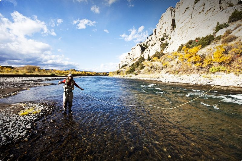 Best Fly Fishing Rivers In Montana. Each year, anglers arrive at the Yellowstone region to delight in the wide array of fishing choices and gorgeous scenery on our rivers and creeks