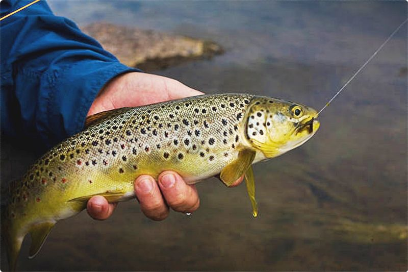 Fly fishing in Utah is not only fun and enjoyable, but it will also supply you with some incredible experiences as you take in the beauty of this beautiful state